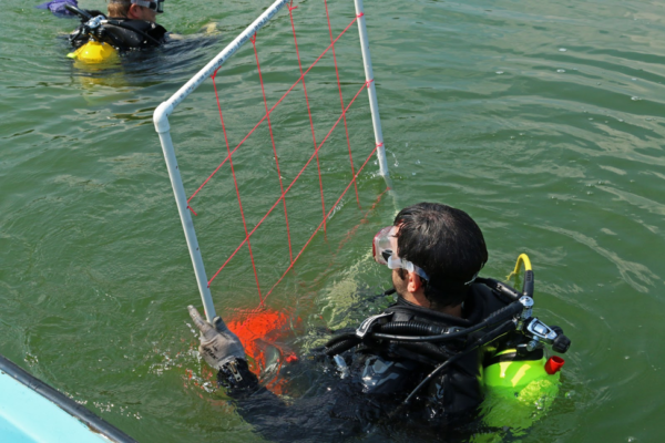 The team dives to count mussels using transects.