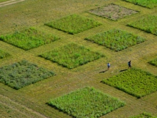 Grassland plot experiments at Cedar Creek LTER in Minnesota.