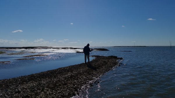 Recording above water sounds of an oyster reef. Photo: Cora Ann Johnston