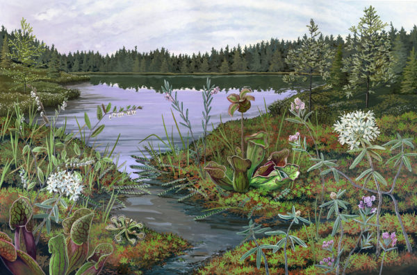 Crystal Bog by Jessica Jabs, 2017 Drawing Water Resident