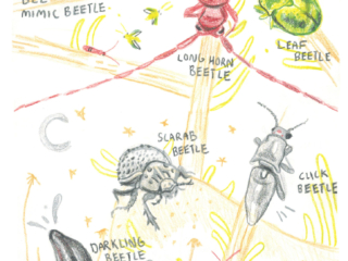 Page of the final insect book from Human-insect Intervention, by Siena McKim, 2018 Sevilleta Reseach Experience for Undergraduates Art Student