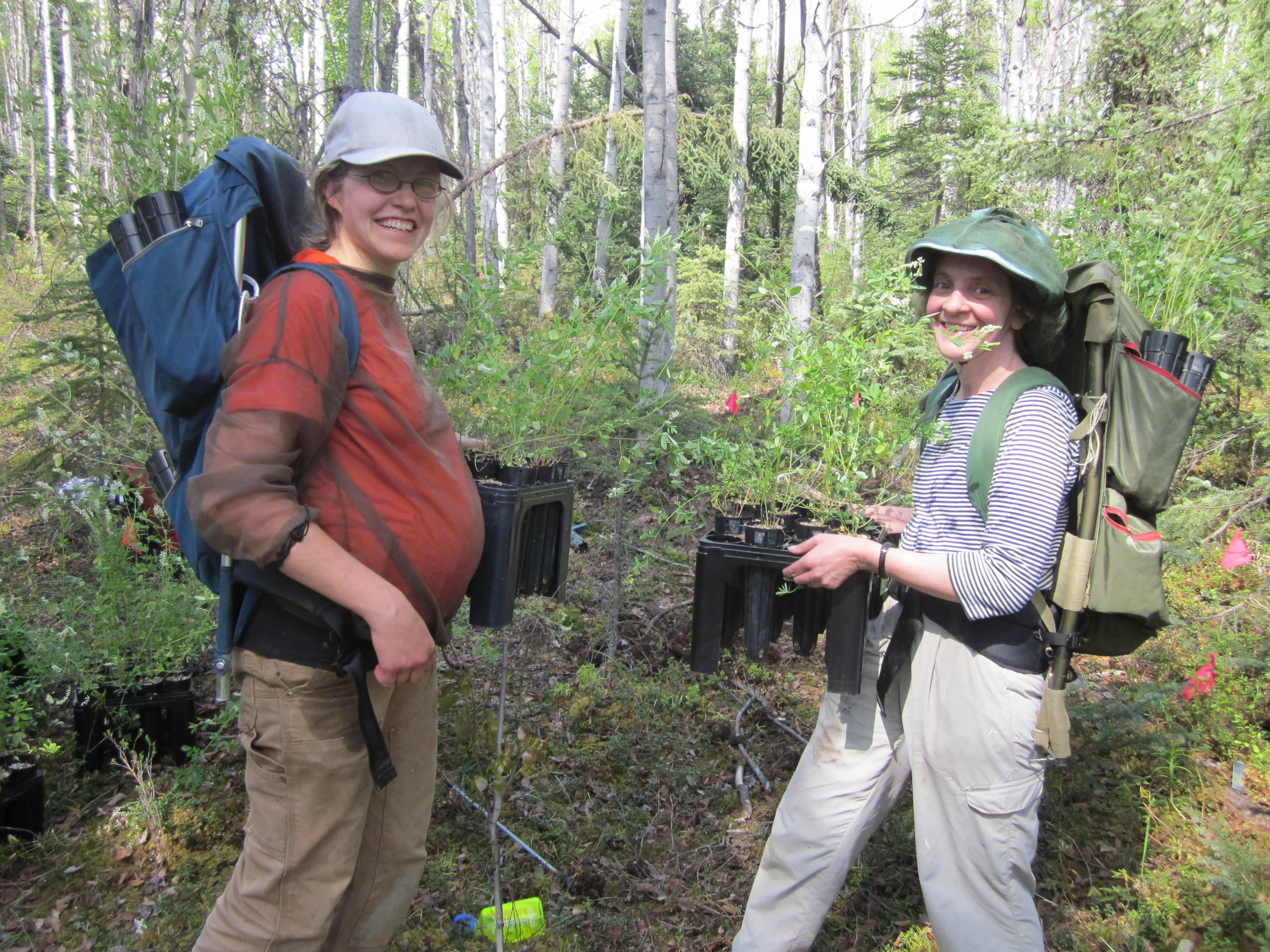 Dr. Christa Mulder and Dr. Katie Spellman removing non-native Melilotus albus plants.