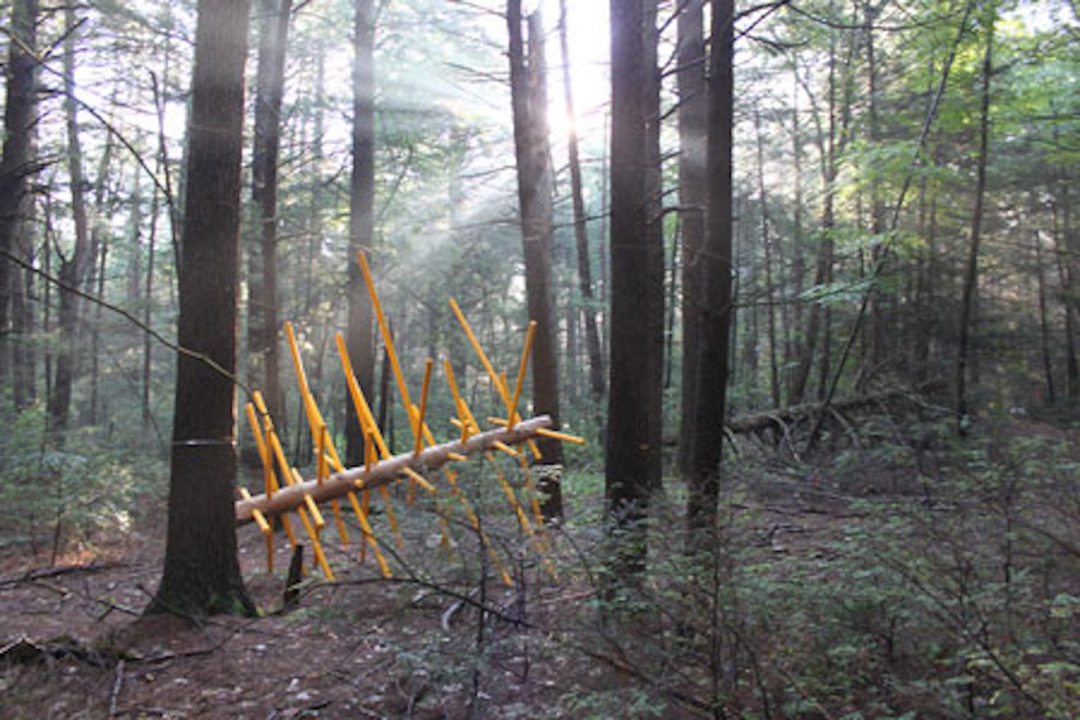 Exchange Tree, by David Buckley Borden. 2017.