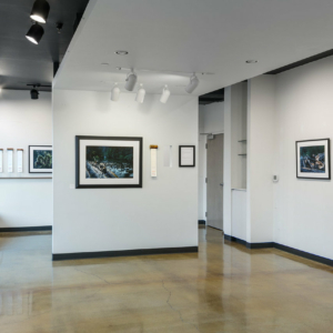 Gallery shot of work by photographer and essayist David Paul Bayles in collaboration with researchers at AND LTER.
