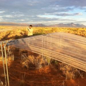 JRN LTER researchers prepare a precipitation addition/reduction experiment.