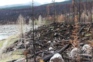 Aftermath of forest fire