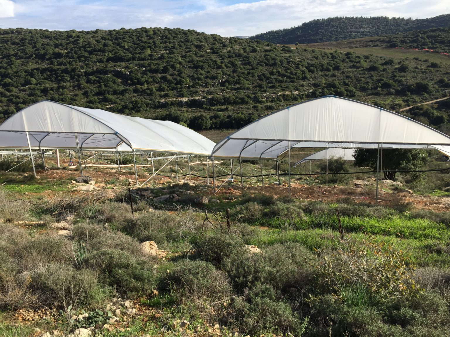 Plastic covering excludes rain from plots of desert shrubs.