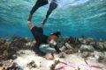 Dana performing an algae assay to measure herbivory in the lagoon.