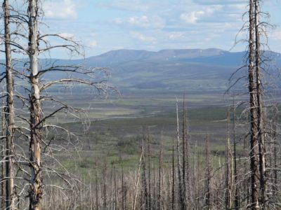 Bonanza Creek LTER boreal forest after a fire