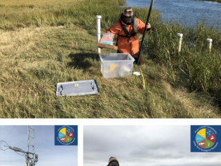 Clockwise from top: Sam Kelsey collecting marsh porewater, October 2020; Sam Kelsey traveling to field sites, October 2020; Inke Forbrich at eddy covariance tower in short Spartina alterniflora marsh, September 2020.