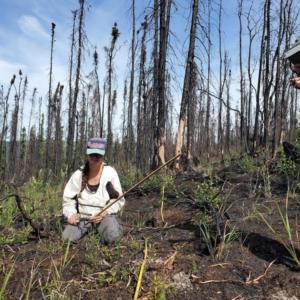 Mel Boyd measures the remnants of burned shrubs along a transect line across the Shovel Creek fire scar near Fairbanks, Alaska.