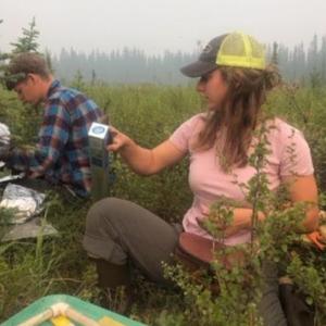 Emilia and her field tech, Elliot, in the field sampling black spruce forest fuel loads at Bonanza Creek LTER in Alaska.