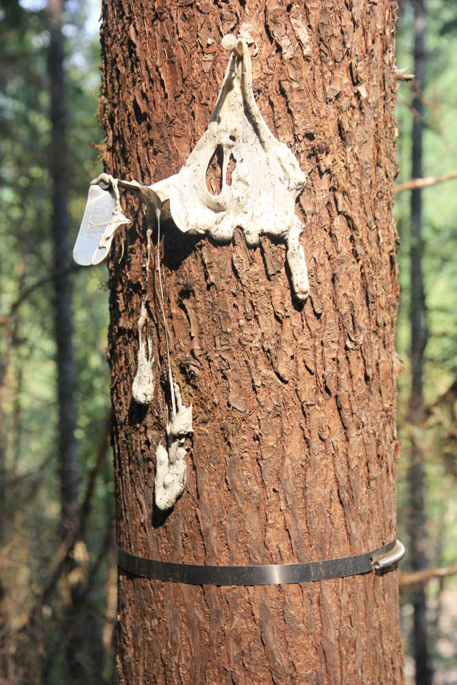 Close up of melted tree label on burned tree