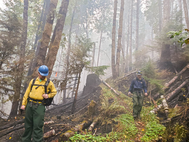 Fire resource advisors inspect Watershed 1 in Andrews Forest.