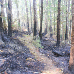 Aftermath of Holiday Fire in Watershed 1