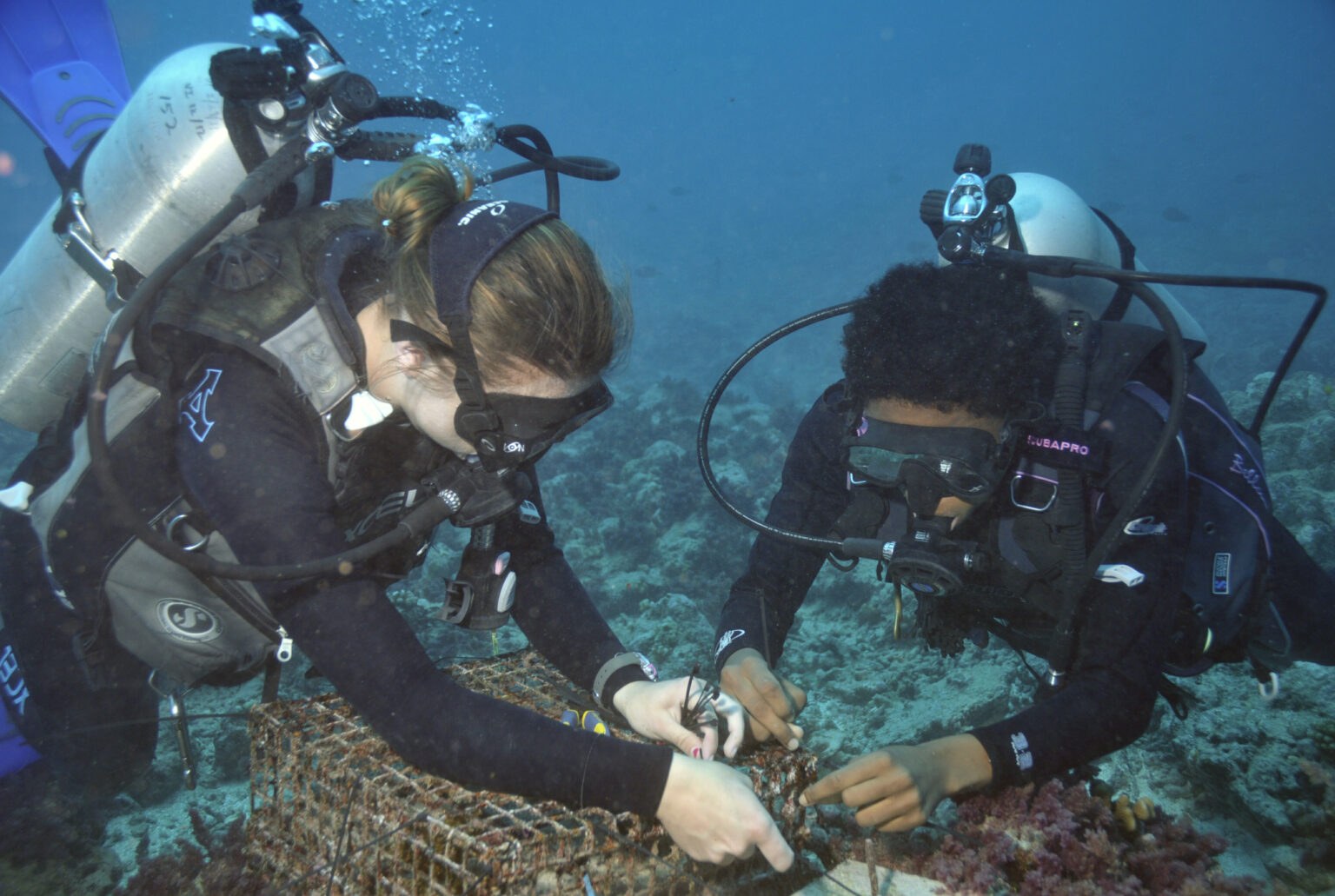 two divers work on a small-mesh cage on an underwater reef