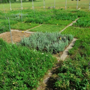 square plots of diverse herbs and shrubs