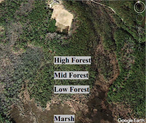 Aerial photograph of forest with increasing numbers of dead trees closer to the marsh
