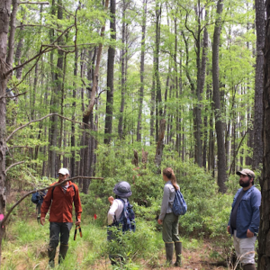 researchers perusing an open forested landscape